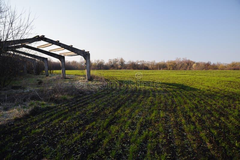 Ландшафт сельской местности аграрный Получившаяся отказ туша парника в поле урожая весны с голубым небом стоковые фото