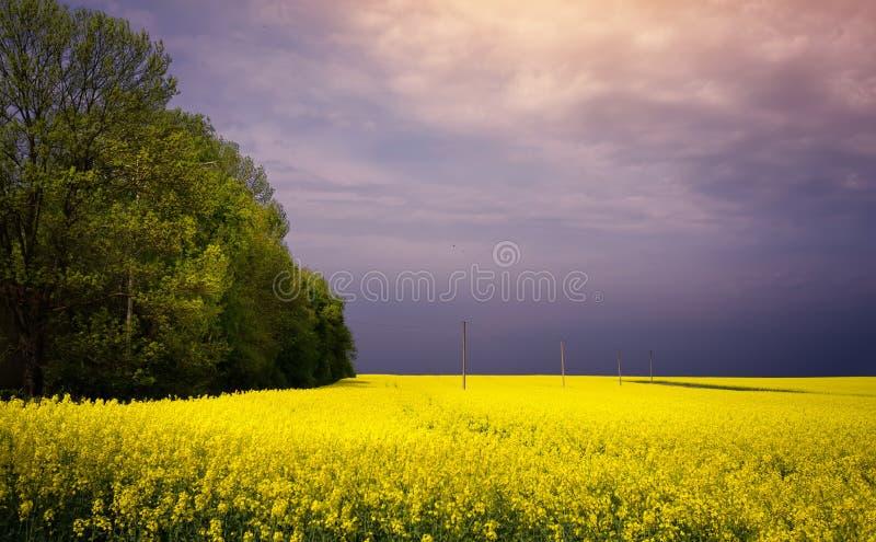 Ландшафт сельской местности весны цветя; зацветая желтое поле стоковые фотографии rf