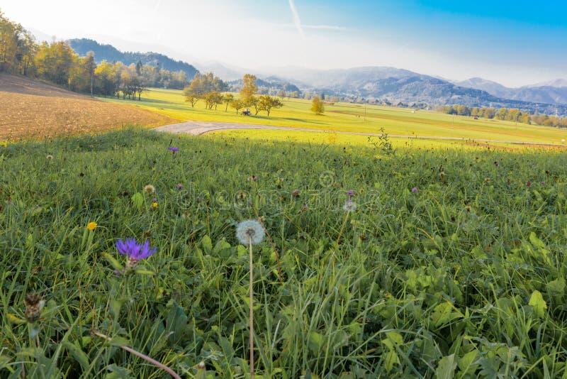 Ландшафт сельской местности в Словении, кровоточенном районе стоковые фото