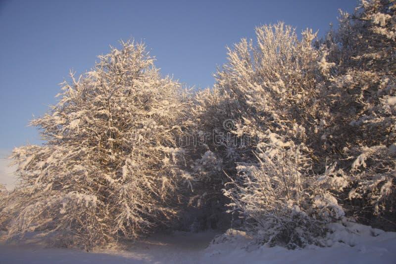 Ландшафт снега зимы, Кардифф, Великобритания стоковое фото