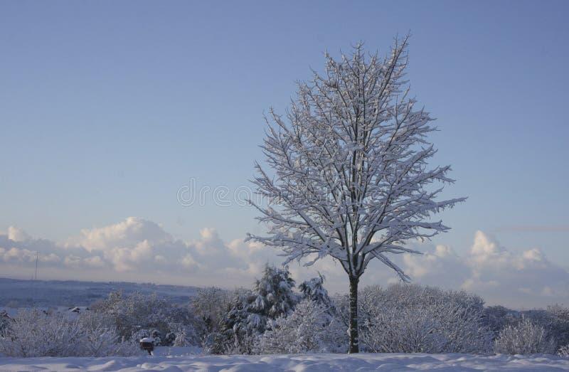Ландшафт снега зимы, Кардифф, Великобритания стоковое изображение rf