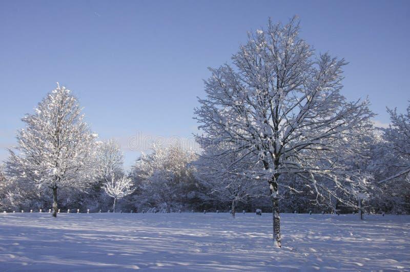 Ландшафт снега зимы, Кардифф, Великобритания стоковое изображение