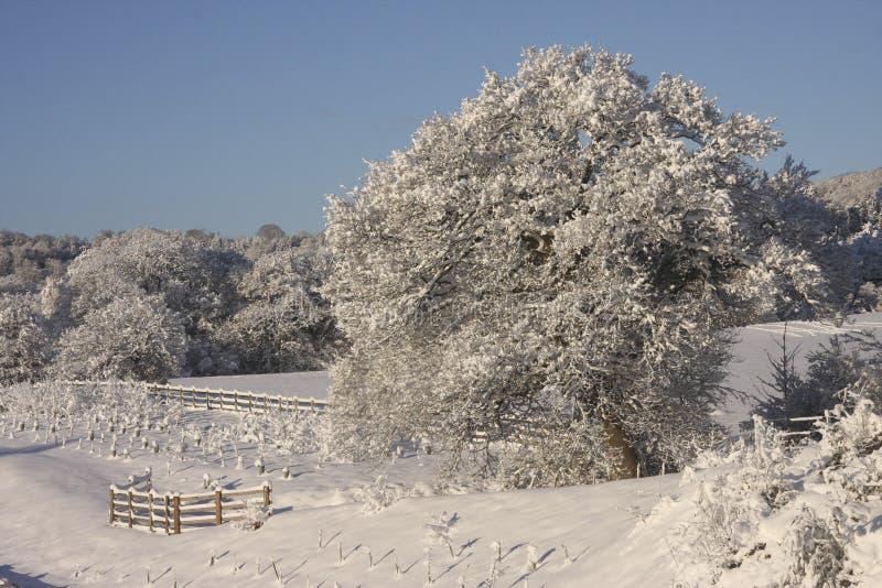 Ландшафт снега зимы, Кардифф, Великобритания стоковые изображения rf