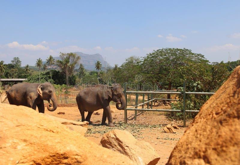 Ландшафт солнца Шри-Ланка природы праздника слона стоковое фото rf