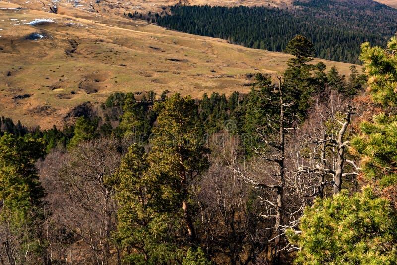 Ландшафт с деревьями в лесе горы в осени стоковая фотография