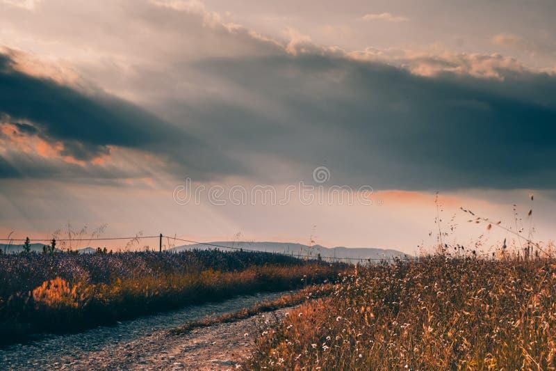 Ландшафт с живописной дорогой через поля лаванды в Провансали, Франции стоковые изображения