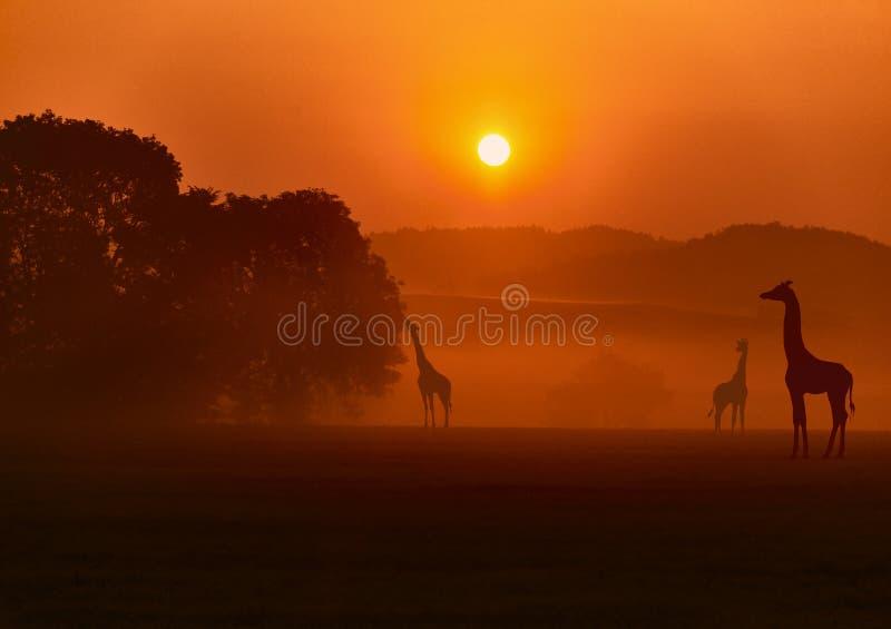 Ландшафт с жирафами стоковое изображение