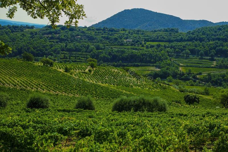 Ландшафт с зелеными виноградниками в Люберон, Privence, Францией стоковые изображения rf