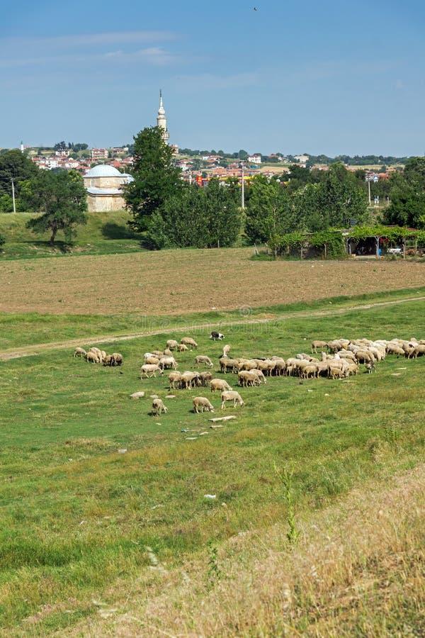 Ландшафт с зелеными лугами на окраинах города Эдирне, восточной Фракии, Турции стоковое изображение rf