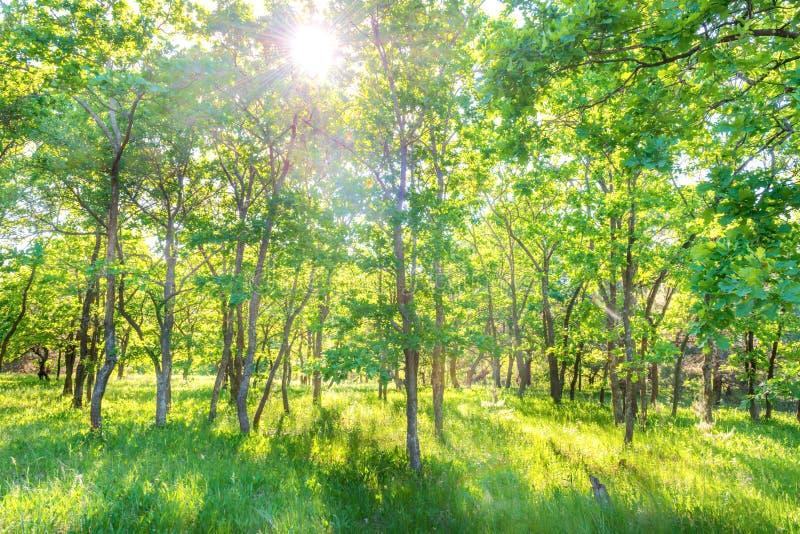 Ландшафт с зеленым лесом стоковая фотография