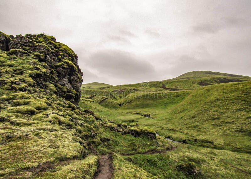 Ландшафт с исландским мхом: мягкая зеленая крышка ковров остр-окаимила черные камни на полях лавы стоковые фото