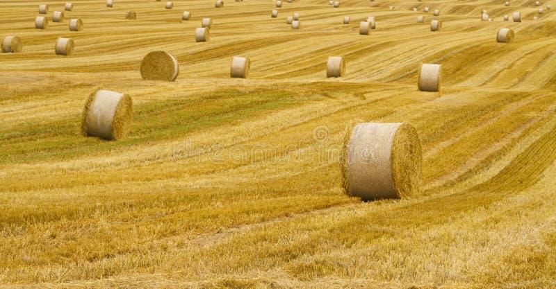 Ландшафт с креном сена стоковые изображения