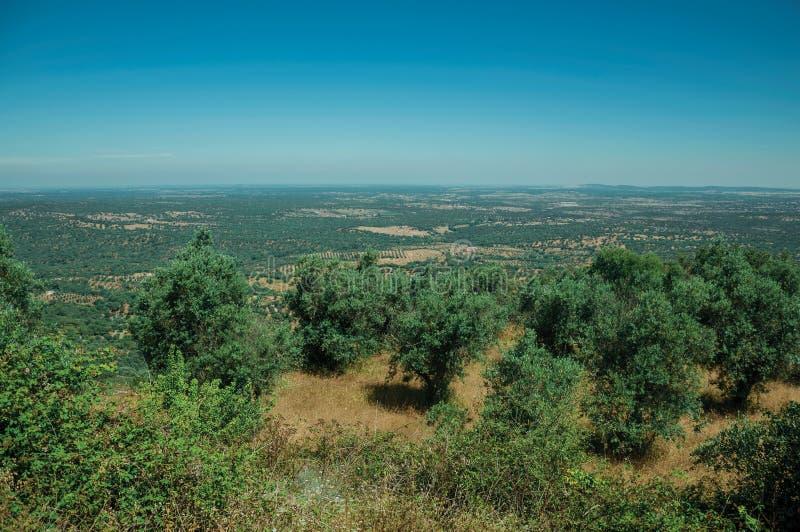 Ландшафт с оливковыми деревами поверх холма стоковое изображение