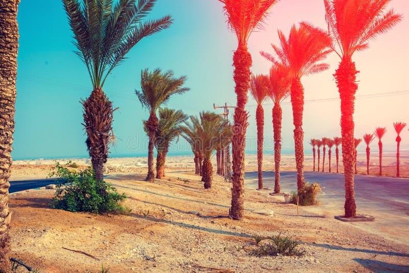 Ландшафт с пальмами в пустыне Дорога к мертвому морю стоковое изображение
