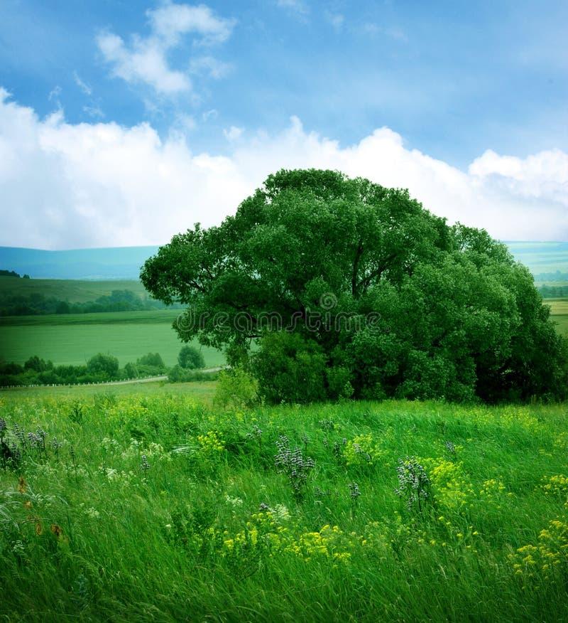 ландшафт с полем цветков стоковые изображения rf