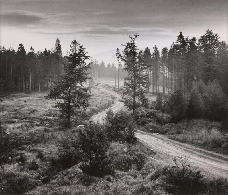 Ландшафт с путем стоковое фото rf