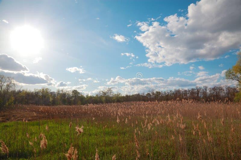 Ландшафт с тростниками стоковая фотография