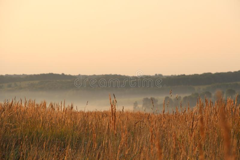 Ландшафт с туманом стоковое изображение