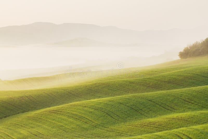 Ландшафт Тосканы на восходе солнца Типичный для сельского дома региона тосканского, холмов, виноградника Ландшафт Италии свежий з стоковое изображение