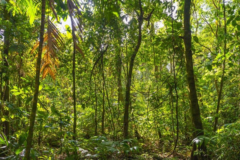 Ландшафт тропического леса Амазонки, эквадор стоковые фотографии rf