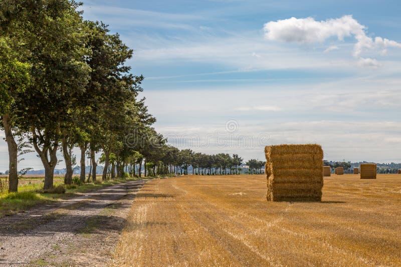 Ландшафт фермы Кента стоковая фотография