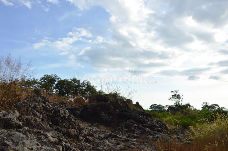 Ландшафт цветка утеса и травы на горе Khao Lon в Таиланде стоковое фото rf