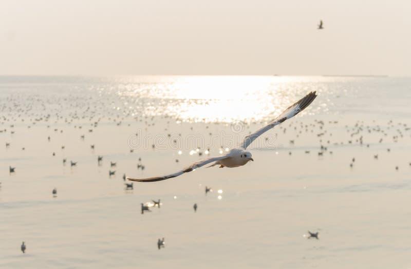 Ландшафт, чайки летает над стадом птицы на небе на море на заходе солнца стоковые фото