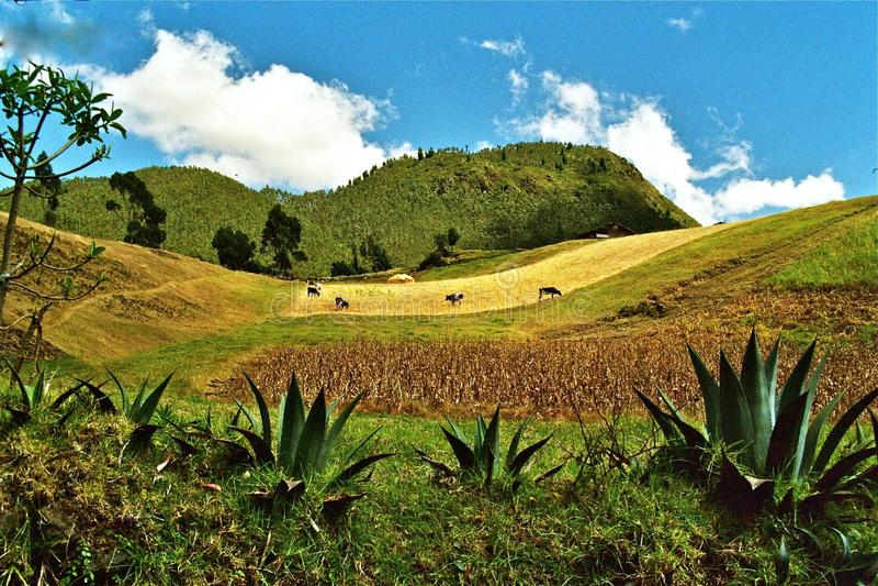 ландшафт эквадора стоковое фото