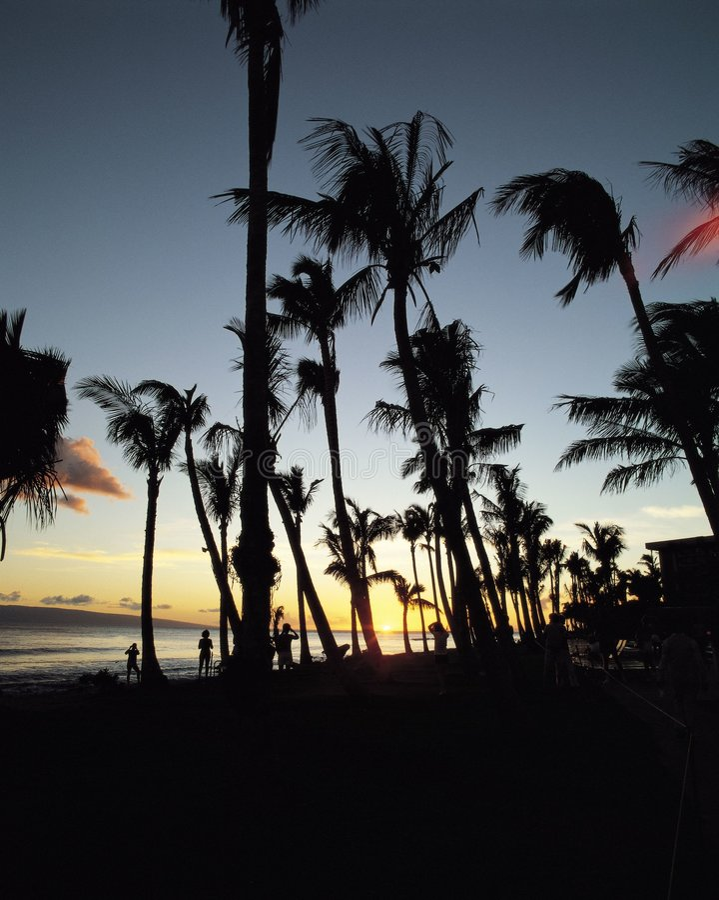 Download ландшафт стоковое изображение. изображение насчитывающей тропическо - 83777
