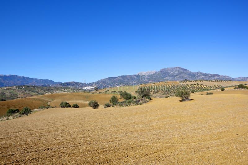 Ландшафт Andalucian аграрный с горами стоковое фото rf