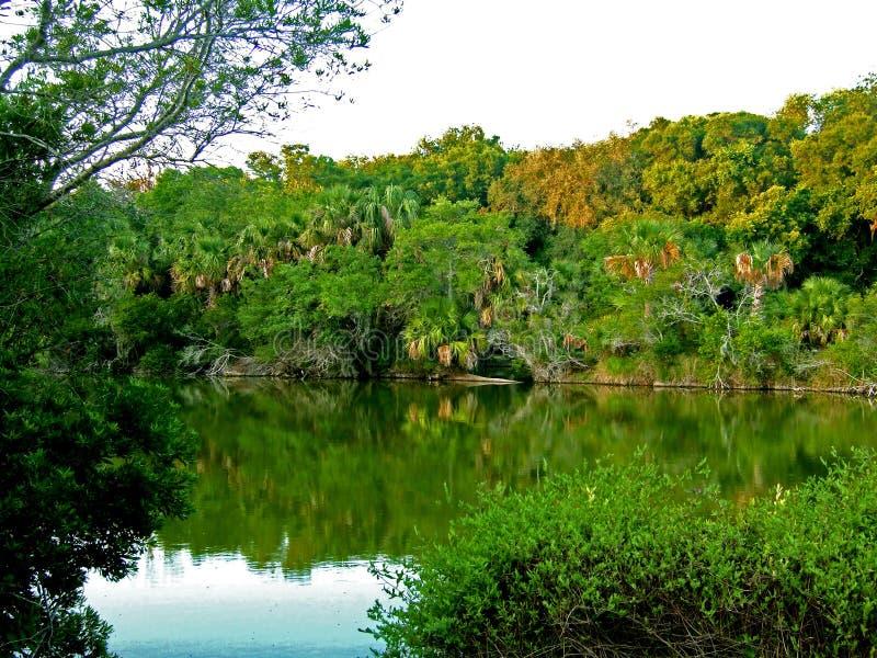 ландшафт florida стоковое фото rf