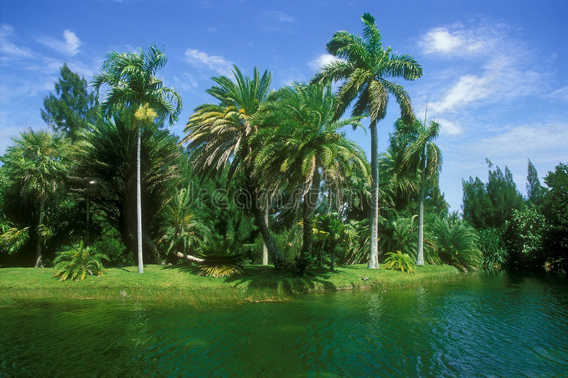 ландшафт florida стоковое изображение rf