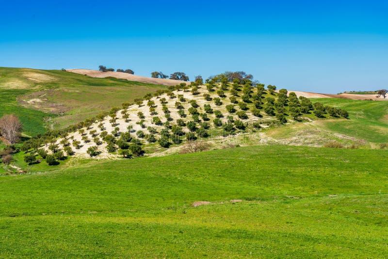 Ландшафт Madrigueras в Сьерра de Grazalema, Андалусии, Испании стоковые изображения