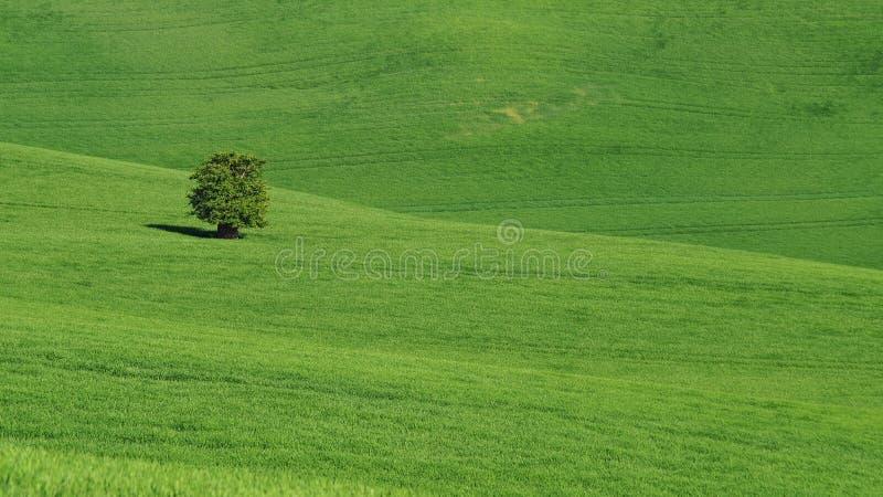 Ландшафт Moravian Тосканы, южной Моравии, чехии стоковые фотографии rf