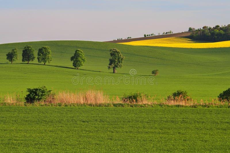 Ландшафт Moravian Тосканы, южной Моравии, чехии стоковые изображения rf