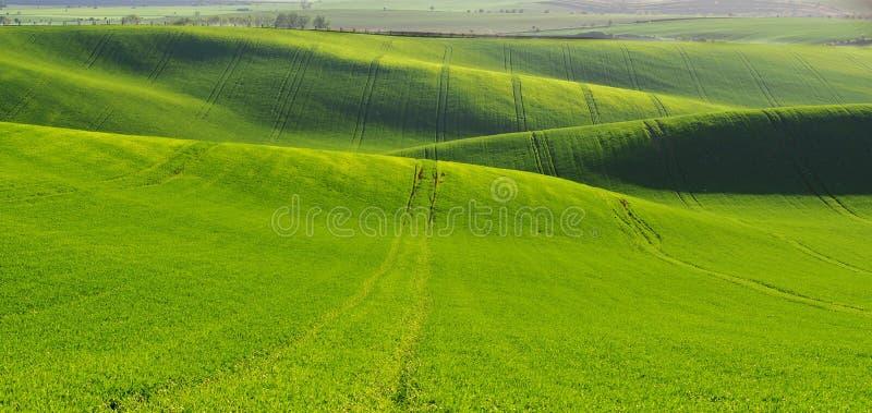 Ландшафт Moravian Тосканы, южной Моравии, чехии стоковая фотография rf