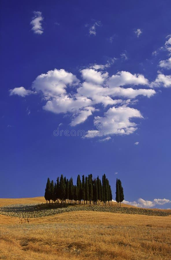 ландшафт tuscan типичный стоковое изображение rf