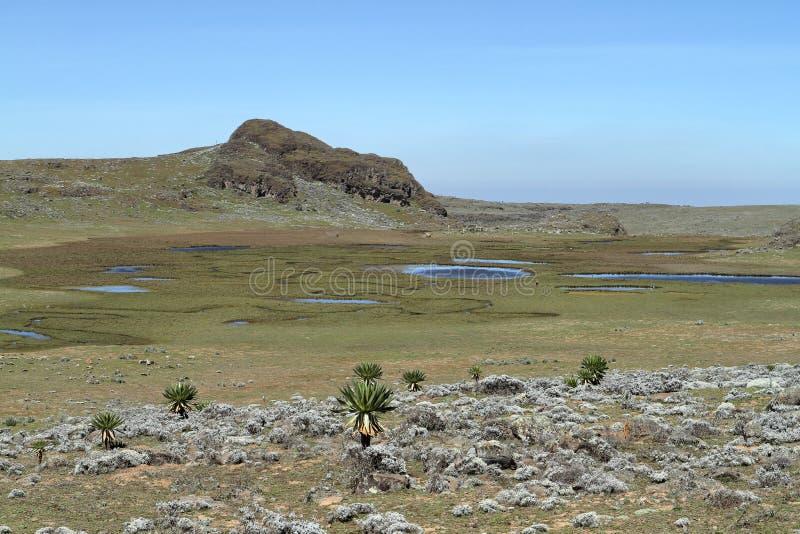 Ландшафты в горах связки национального парка в Эфиопии стоковые фотографии rf