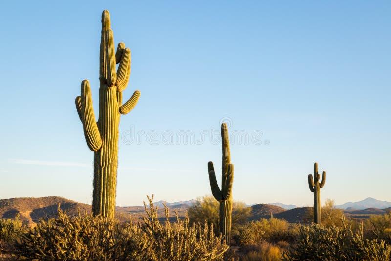 Ландшафты пустыни Аризоны стоковые фото