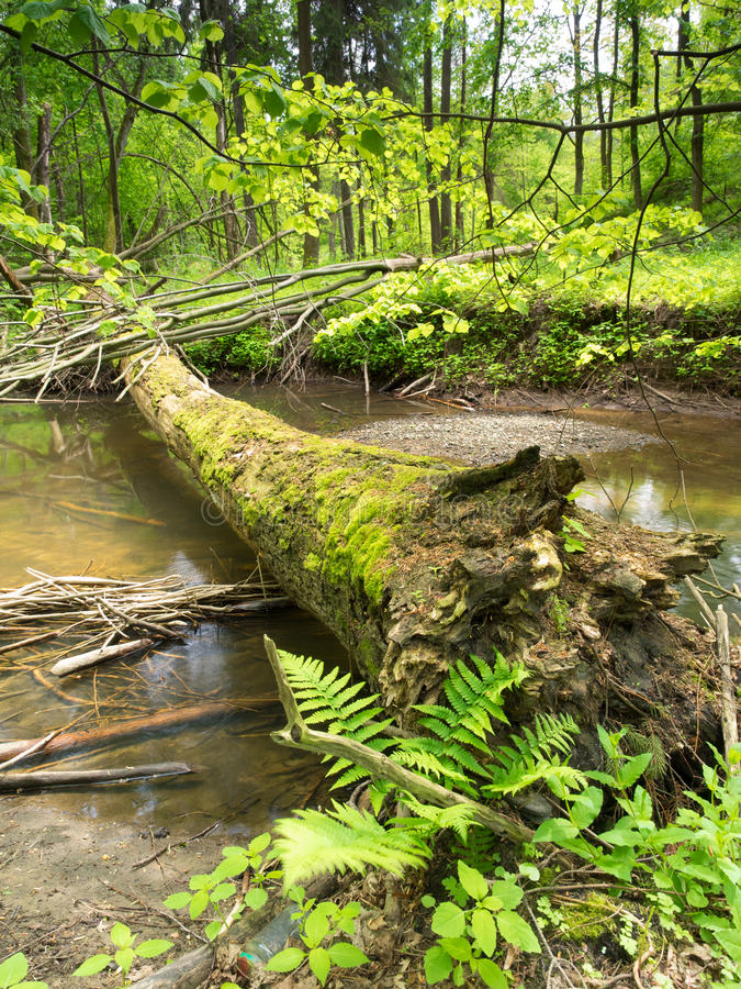 Download Ландшафт валы зеленого цвета травы Стоковое Изображение - изображение насчитывающей перемещение, outdoors: 40584167