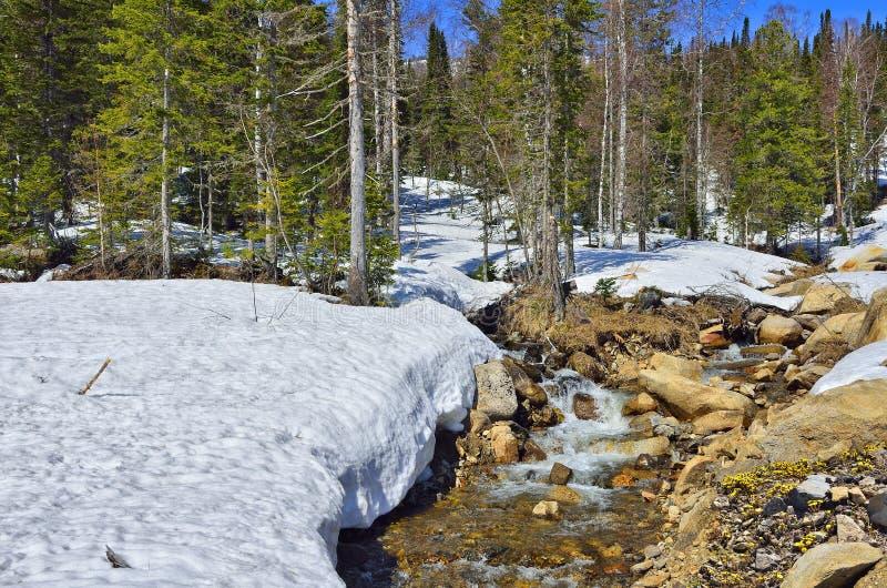 Ландшафт весны в лесе с снегом и первым цветет стоковые фото
