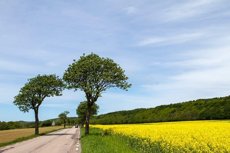 Ландшафт весны в южной Швеции стоковые изображения