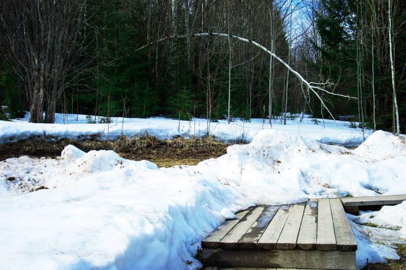 Ландшафт весны леса стоковая фотография