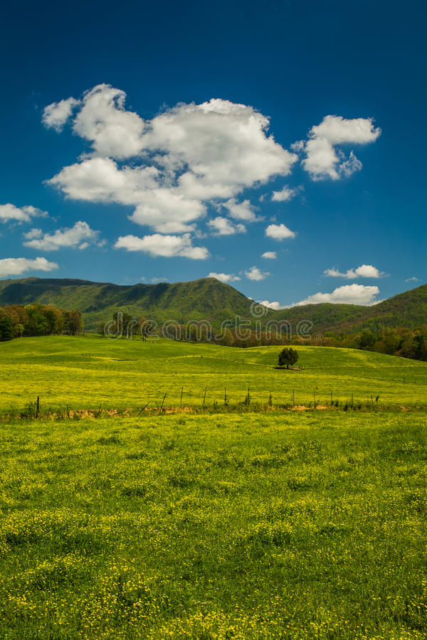 Ландшафт весны, зона Mtn английского языка стоковое фото rf