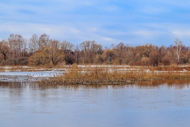 Ландшафт весны, прилив на реке стоковое изображение rf