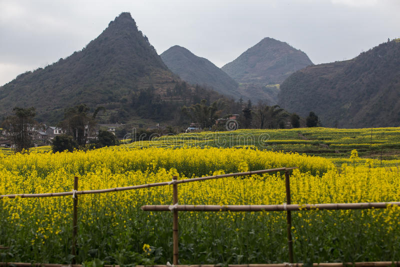 Ландшафт весны свежий красочных полей, стоковое фото