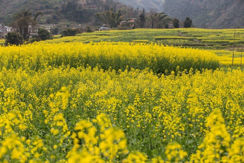 Ландшафт весны свежий красочных полей стоковые изображения