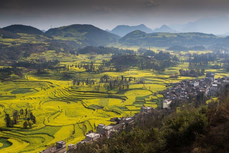 Ландшафт весны свежий красочных полей, стоковое фото rf