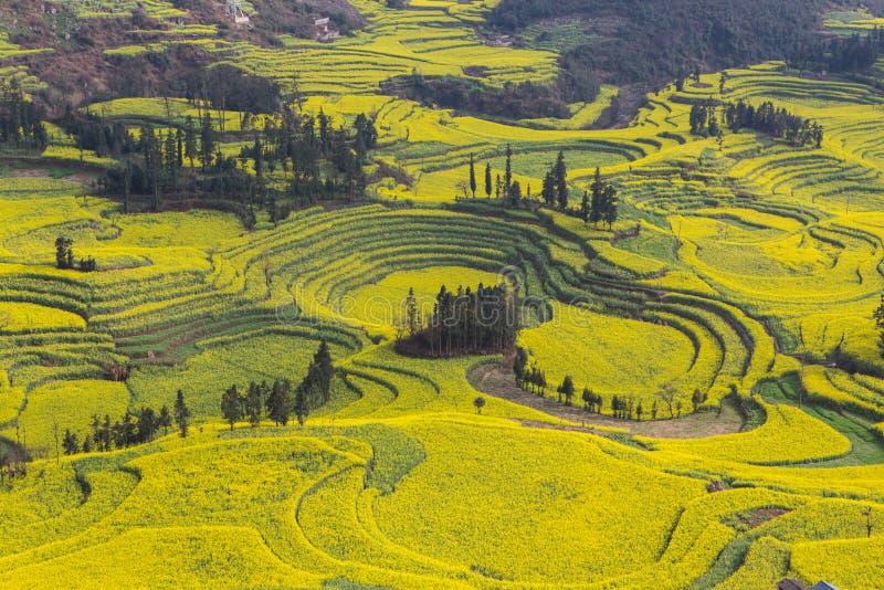 Ландшафт весны свежий красочных полей стоковая фотография rf