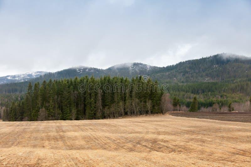 Ландшафт весны сельский норвежский с сухим полем стоковая фотография rf